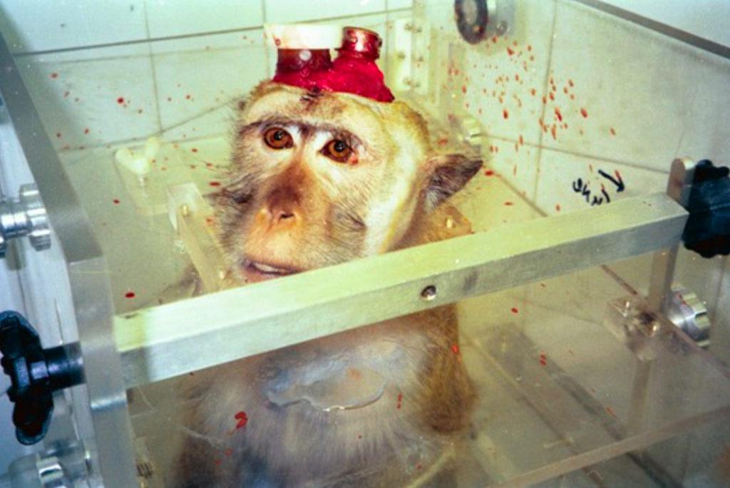 Affe Kopfimplantat