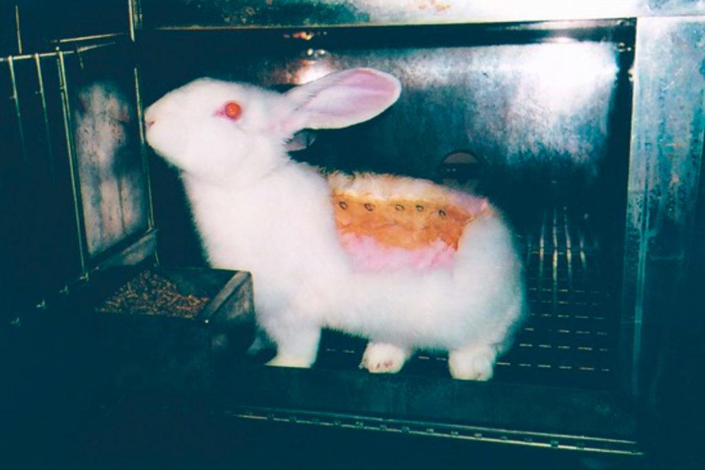 Kaninchen Hauttest